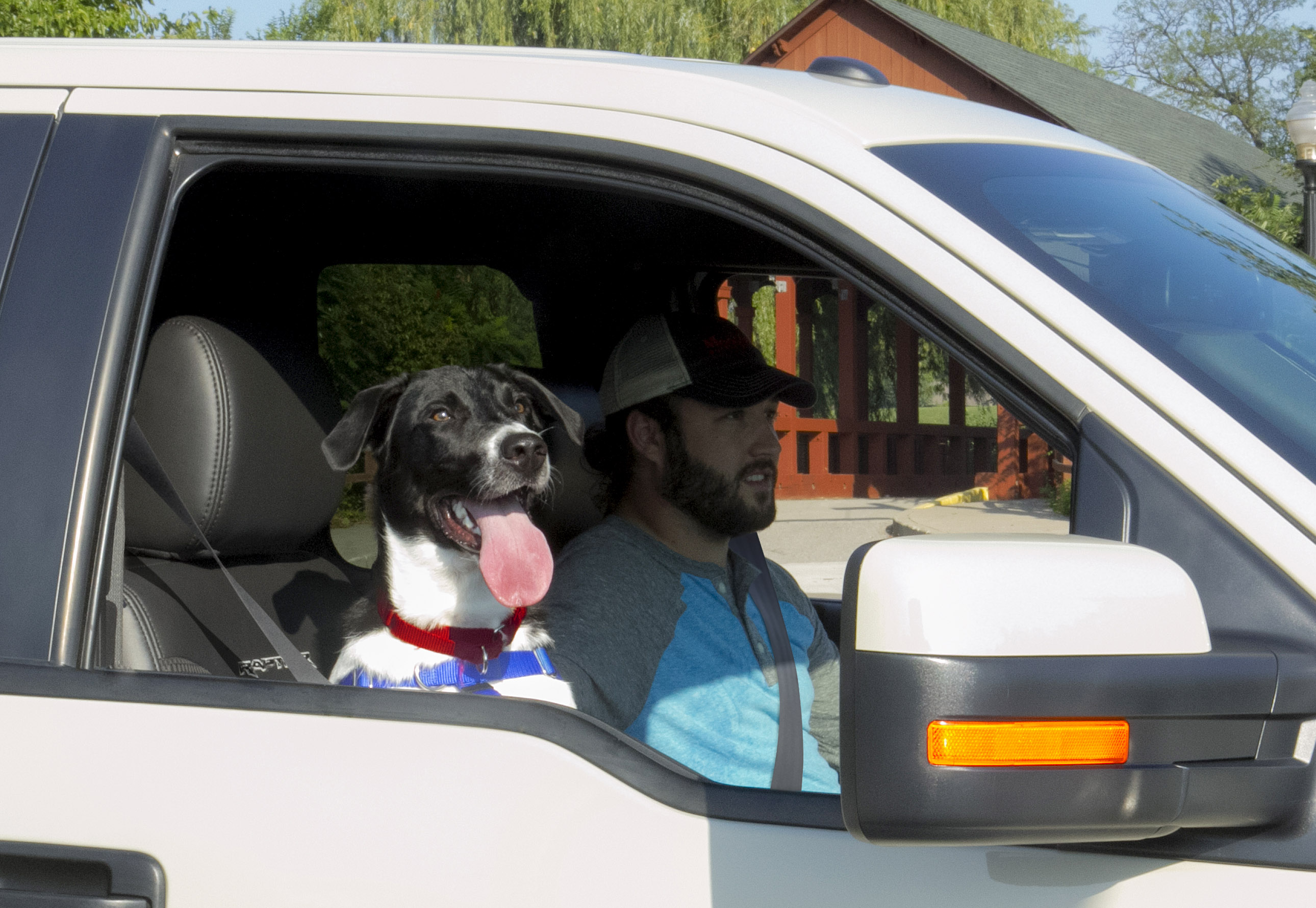 ford the humane association tell pickup owners keep dogs out of truck beds. Black Bedroom Furniture Sets. Home Design Ideas