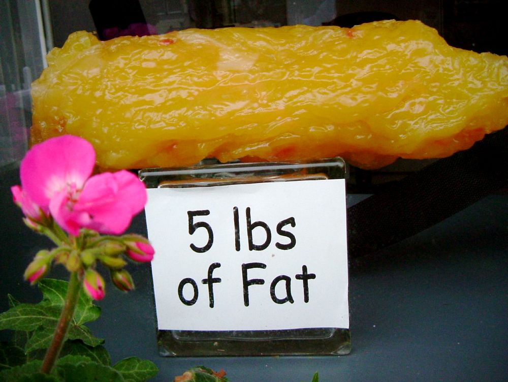 Image 5 Lbs Of Fat Size 1000 X 752 Type Gif Posted On December 2 2008 5 58 Pm Green