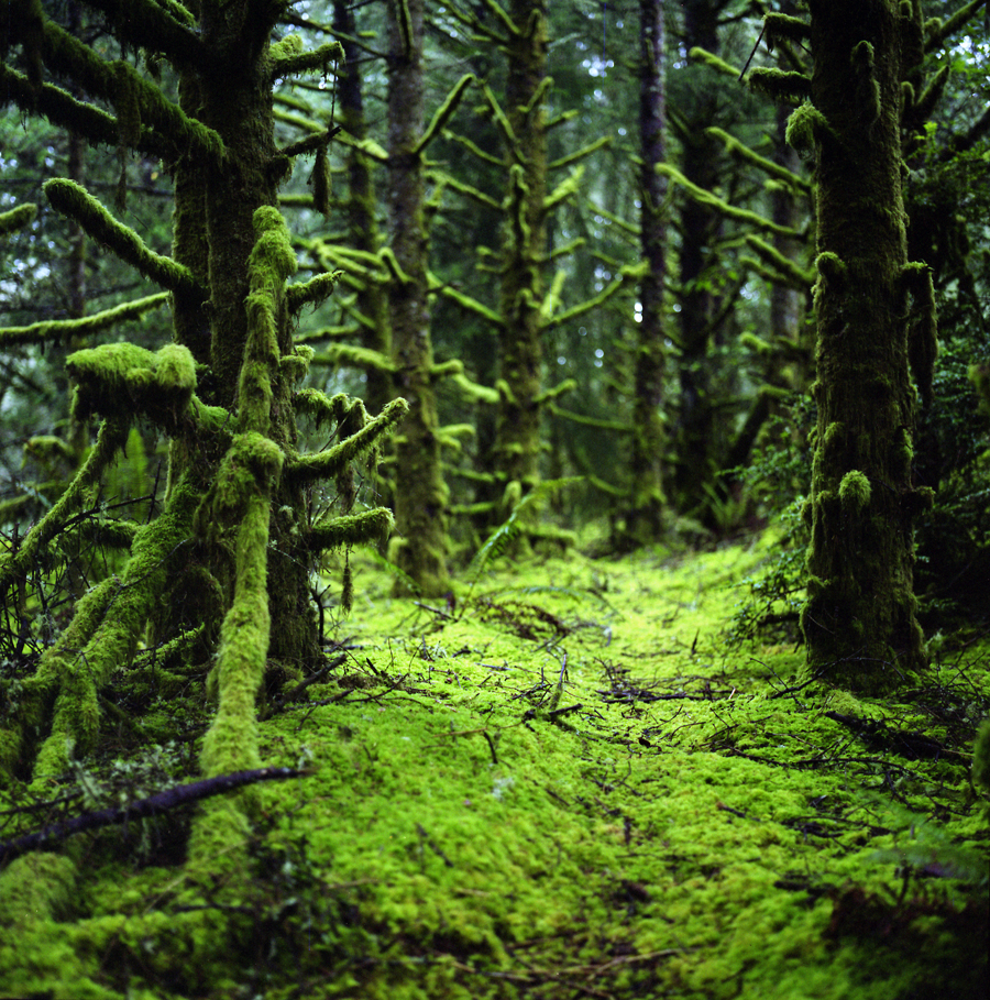 Image Forest Moss Size 900 X 909 Type Gif Posted On